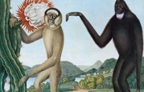 Homo Sapiens, prends ta claque avec 'Primates' de Baston!